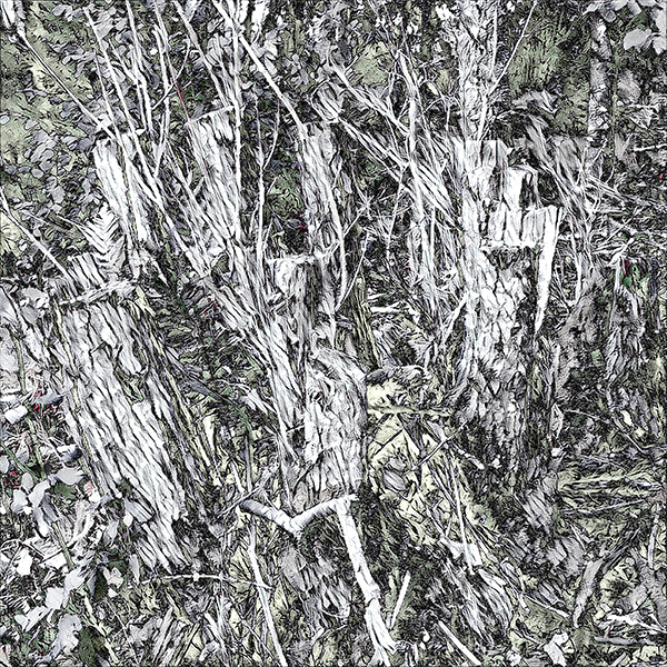 greytreessmall